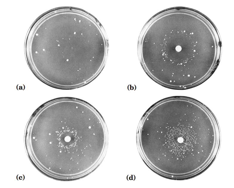 lehninger principles of biochemistry 5th edition pdf
